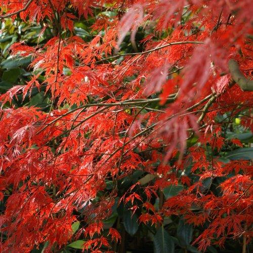 Herbst (3)