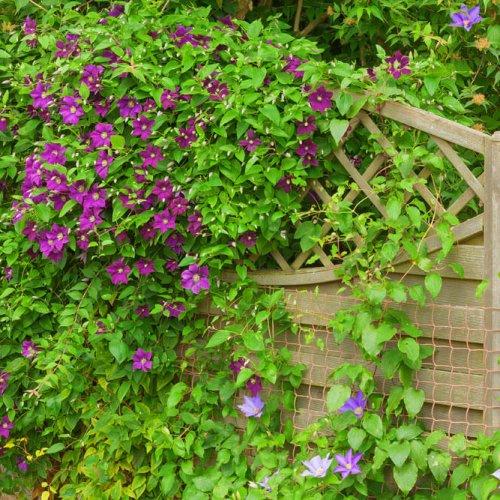 kletterpflanzen-einsatz